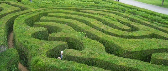 Longleat_,_Hedge_Maze_-_geograph.org.uk_-_1225441